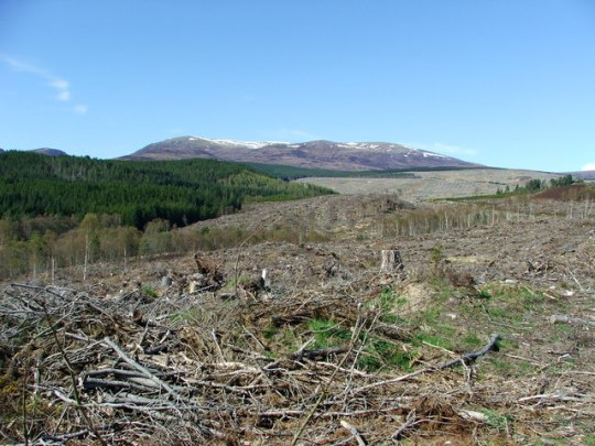 Deforestation_-_geograph.org.uk_-_165560